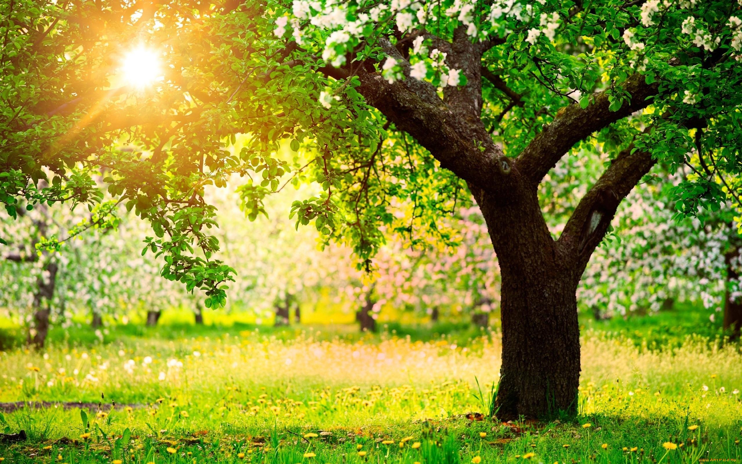 картинки деревьев рабочего стола рано утром